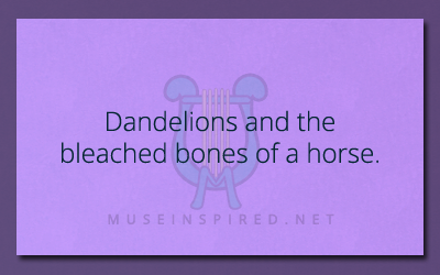 What's the Story – Dandelions and the bleached bones of a horse.