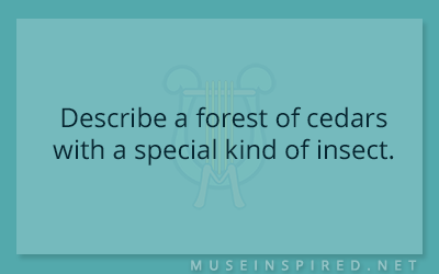 Siring Settings – Describe a forest of cedars with a special kind of insect.